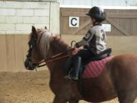 Reprise Baby poney plat